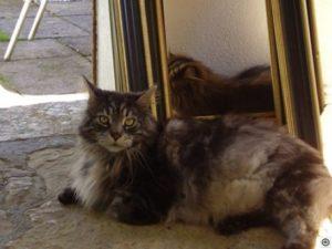 Katze von Mara Algethi